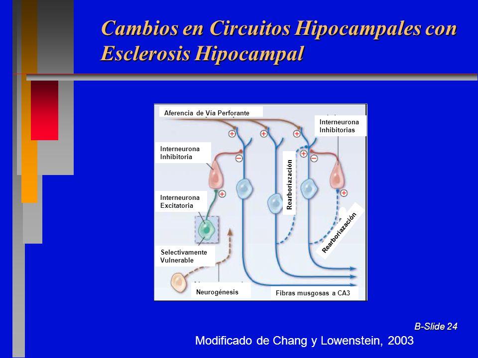 Cambios en Circuitos Hipocampales con Esclerosis Hipocampal