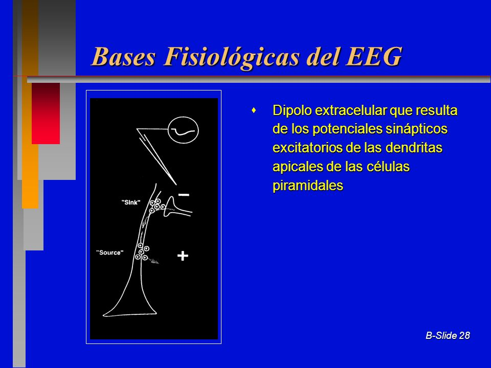 Bases Fisiológicas del EEG