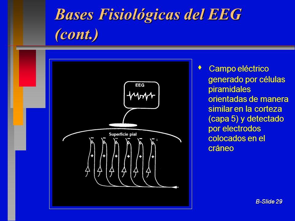 Bases Fisiológicas del EEG (cont.)