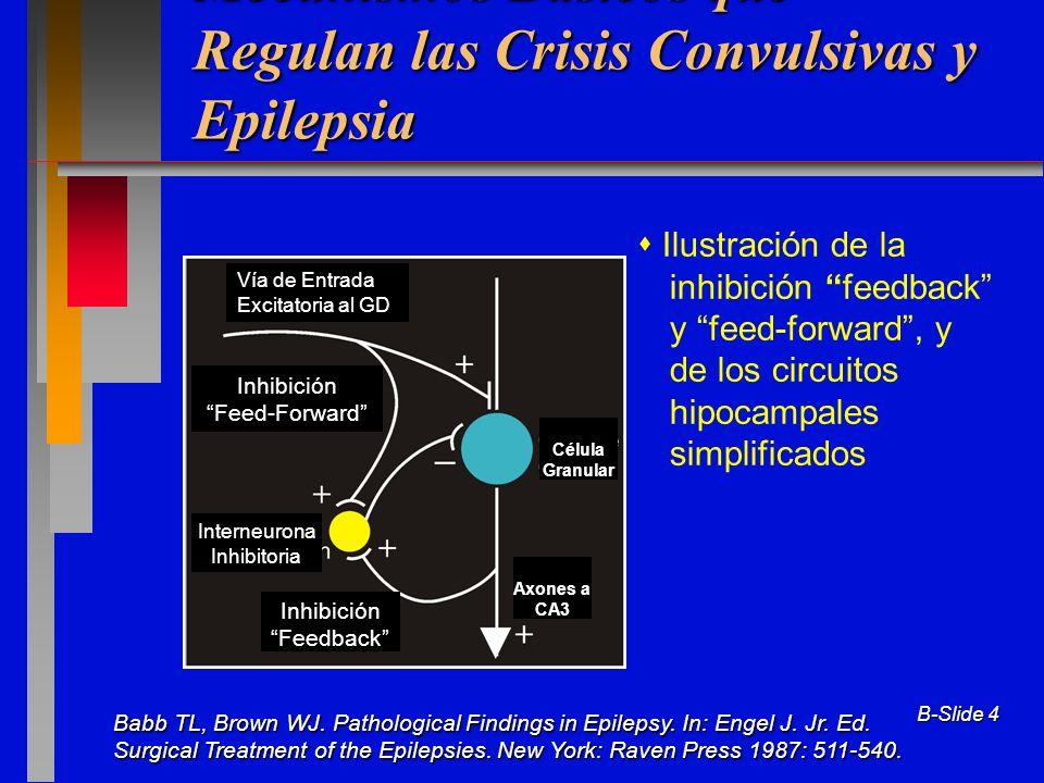 Mecanismos Básicos que Regulan las Crisis Convulsivas y Epilepsia