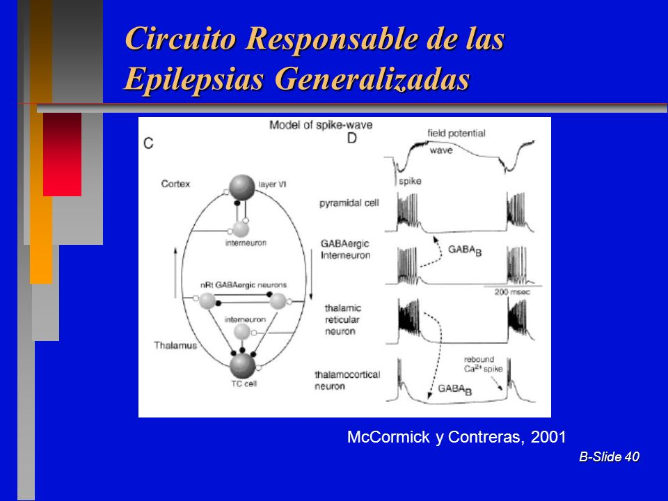 Circuito Responsable de las Epilepsias Generalizadas