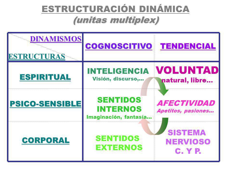 ESTRUCTURACIÓN DINÁMICA (unitas multiplex)