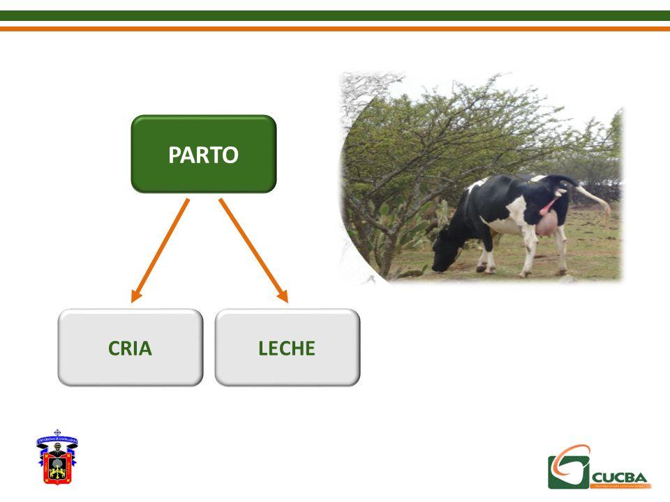 PARTO CRIA LECHE