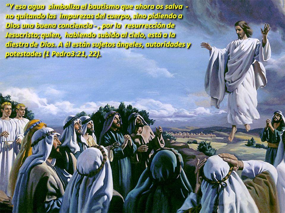 Y esa agua simboliza el bautismo que ahora os salva - no quitando las impurezas del cuerpo, sino pidiendo a Dios una buena conciencia - , por la resurrección de Jesucristo; quien, habiendo subido al cielo, está a la diestra de Dios.
