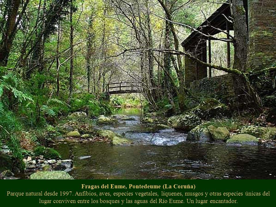 Fragas del Eume, Pontedeume (La Coruña) Parque natural desde 1997