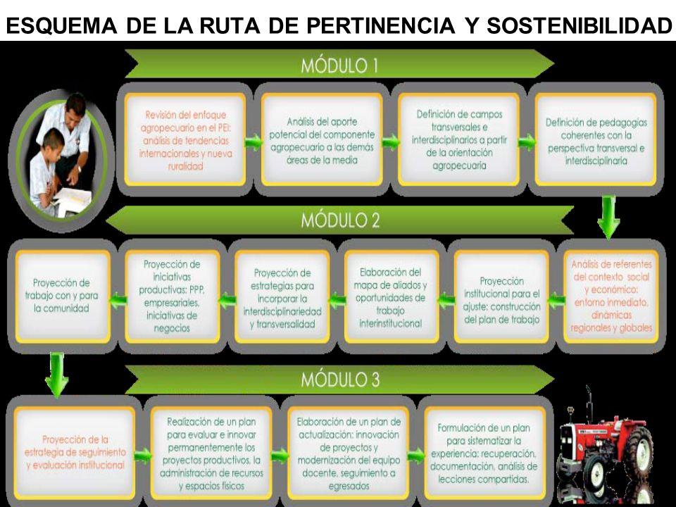 ESQUEMA DE LA RUTA DE PERTINENCIA Y SOSTENIBILIDAD