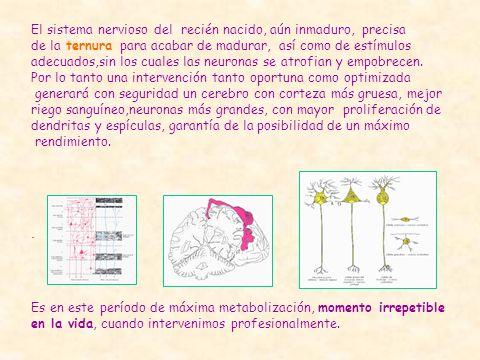 . El sistema nervioso del recién nacido, aún inmaduro, precisa