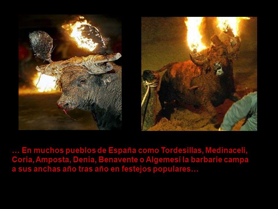 … En muchos pueblos de España como Tordesillas, Medinaceli,