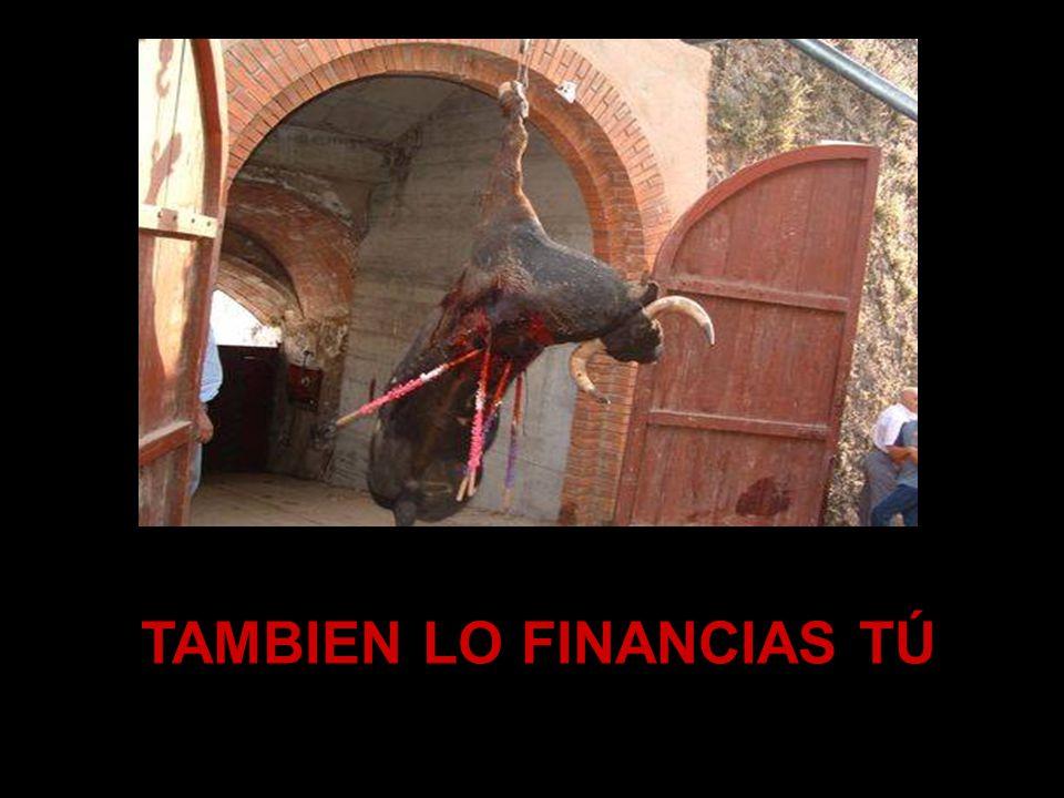 TAMBIEN LO FINANCIAS TÚ