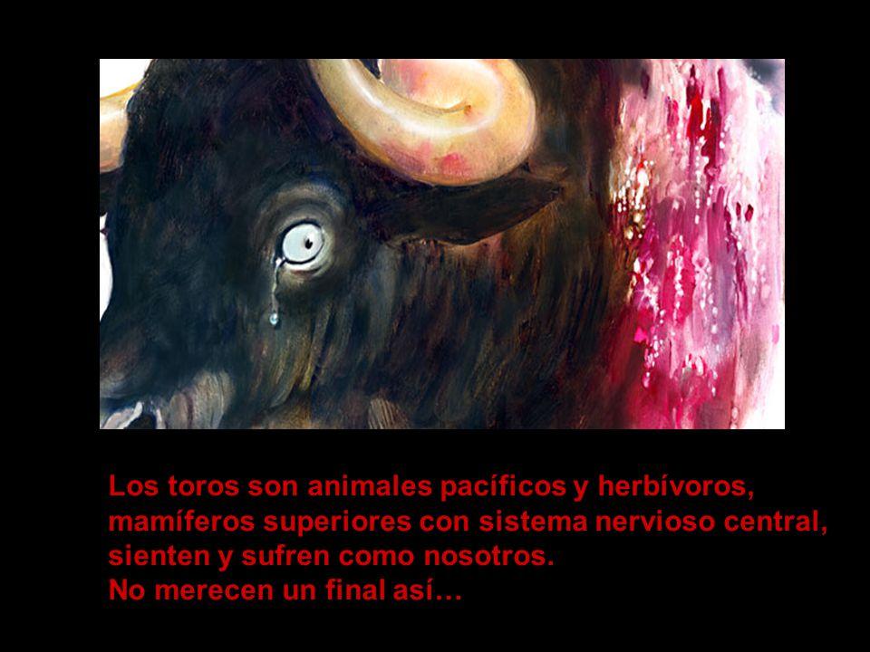 Los toros son animales pacíficos y herbívoros,
