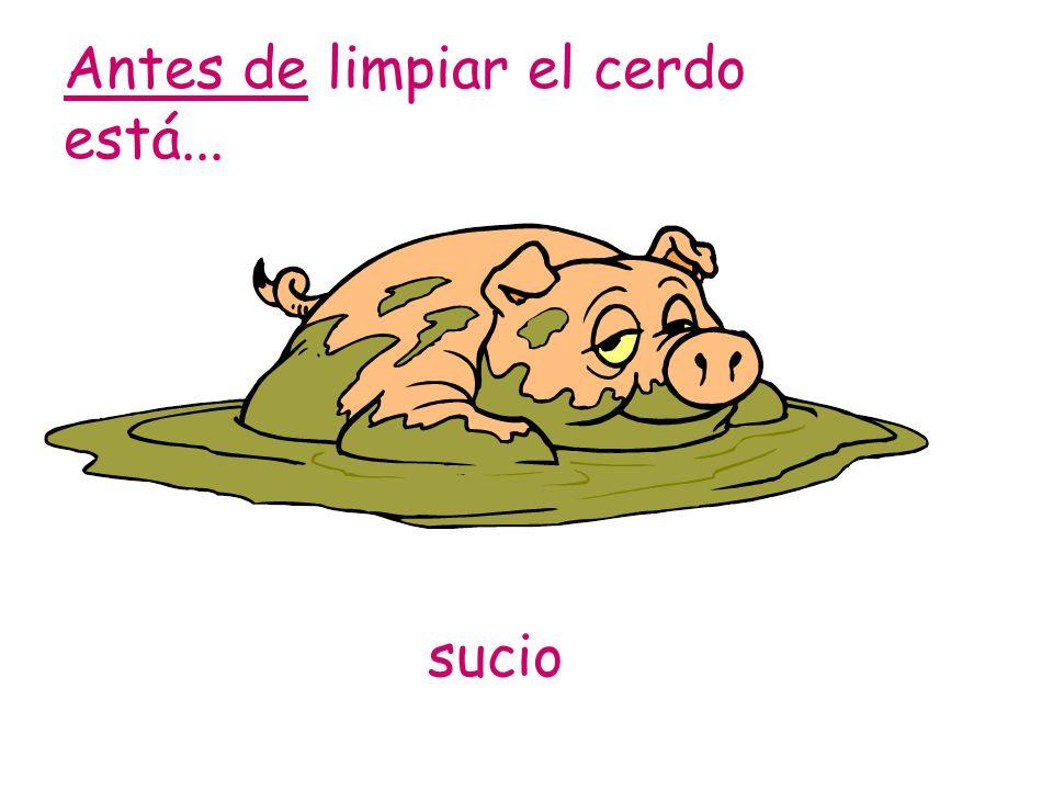 Antes de limpiar el cerdo está...