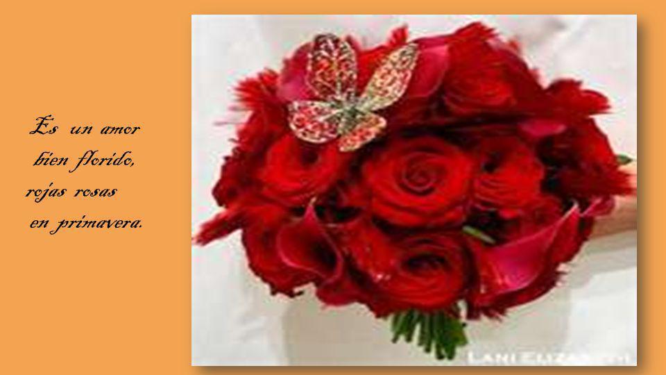 bien florido, rojas rosas en primavera.