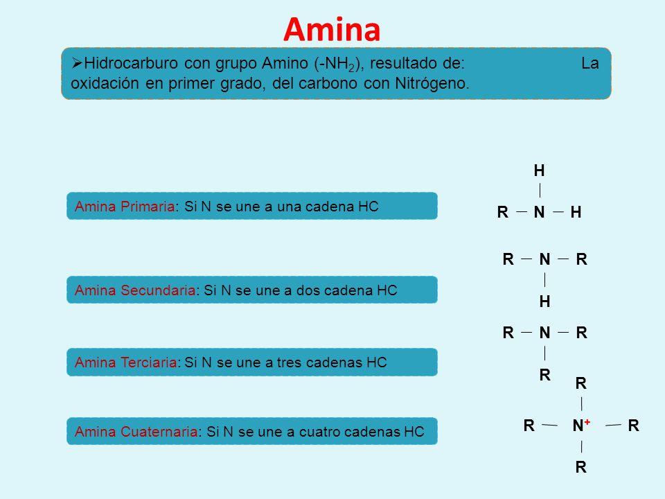 Amina Hidrocarburo con grupo Amino (-NH2), resultado de: La oxidación en primer grado, del carbono con Nitrógeno.