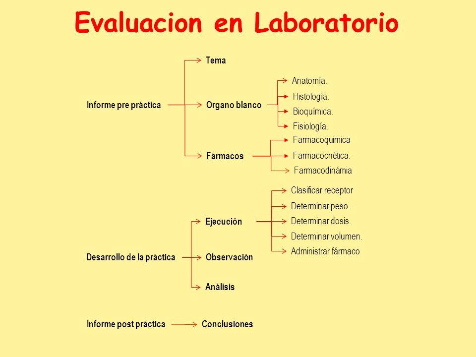 Evaluacion en Laboratorio