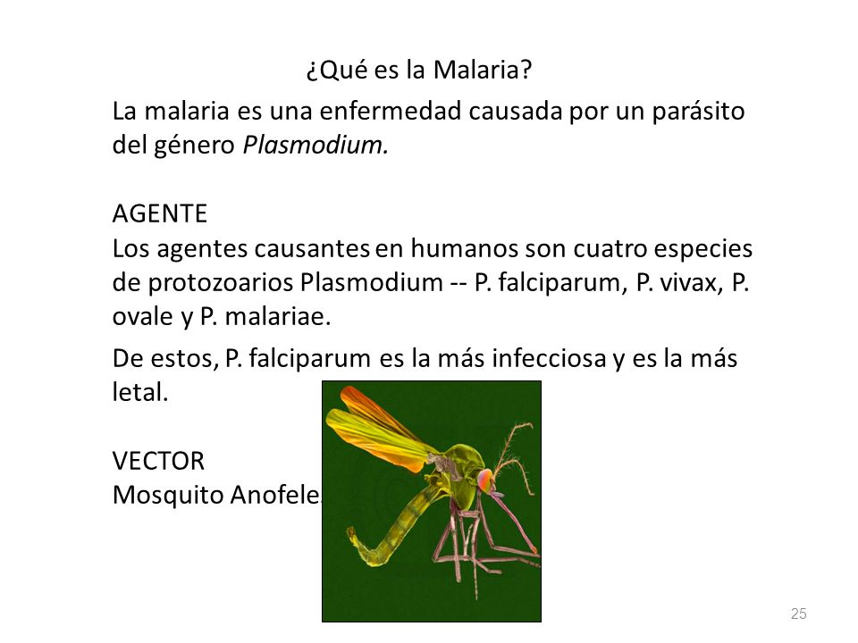 ¿Qué es la Malaria