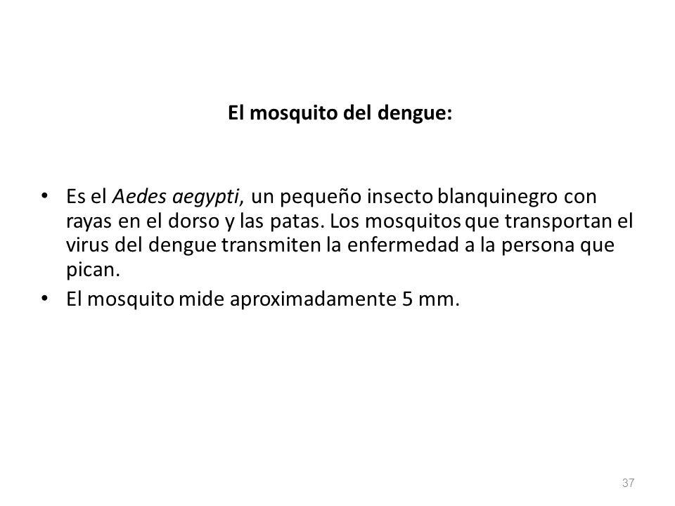 El mosquito del dengue: