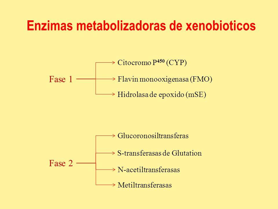 Enzimas metabolizadoras de xenobioticos