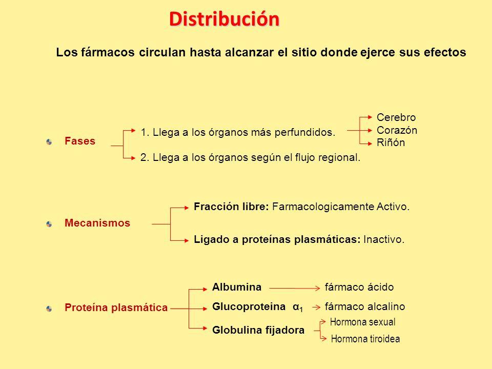 Distribución Los fármacos circulan hasta alcanzar el sitio donde ejerce sus efectos. Cerebro. 1. Llega a los órganos más perfundidos.