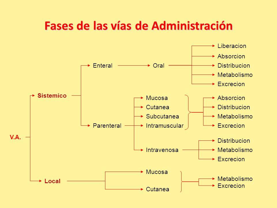 Fases de las vías de Administración