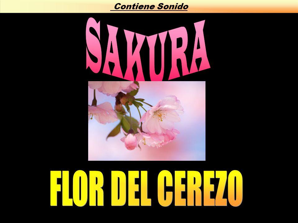 Contiene Sonido SAKURA FLOR DEL CEREZO