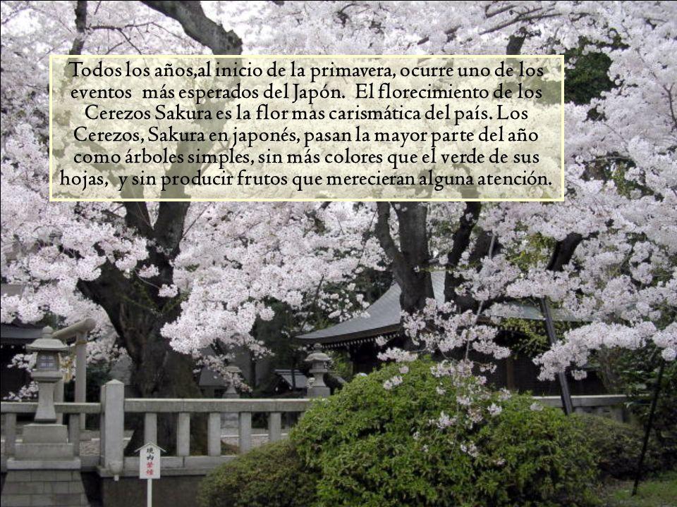 Todos los años,al inicio de la primavera, ocurre uno de los eventos más esperados del Japón.