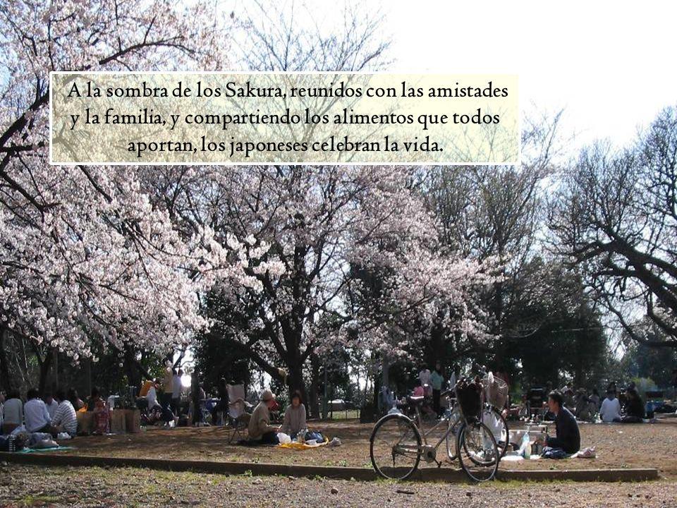 A la sombra de los Sakura, reunidos con las amistades y la familia, y compartiendo los alimentos que todos aportan, los japoneses celebran la vida.