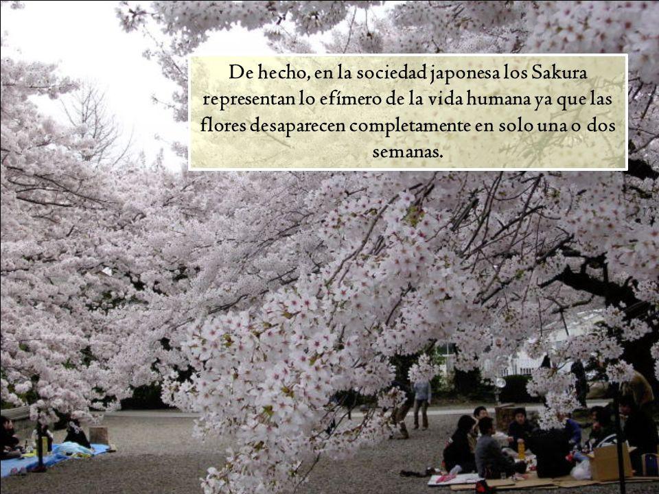 De hecho, en la sociedad japonesa los Sakura representan lo efímero de la vida humana ya que las flores desaparecen completamente en solo una o dos semanas.
