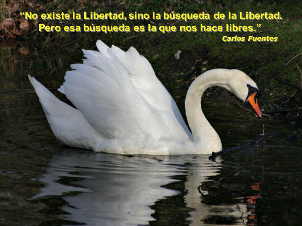 No existe la Libertad, sino la búsqueda de la Libertad.