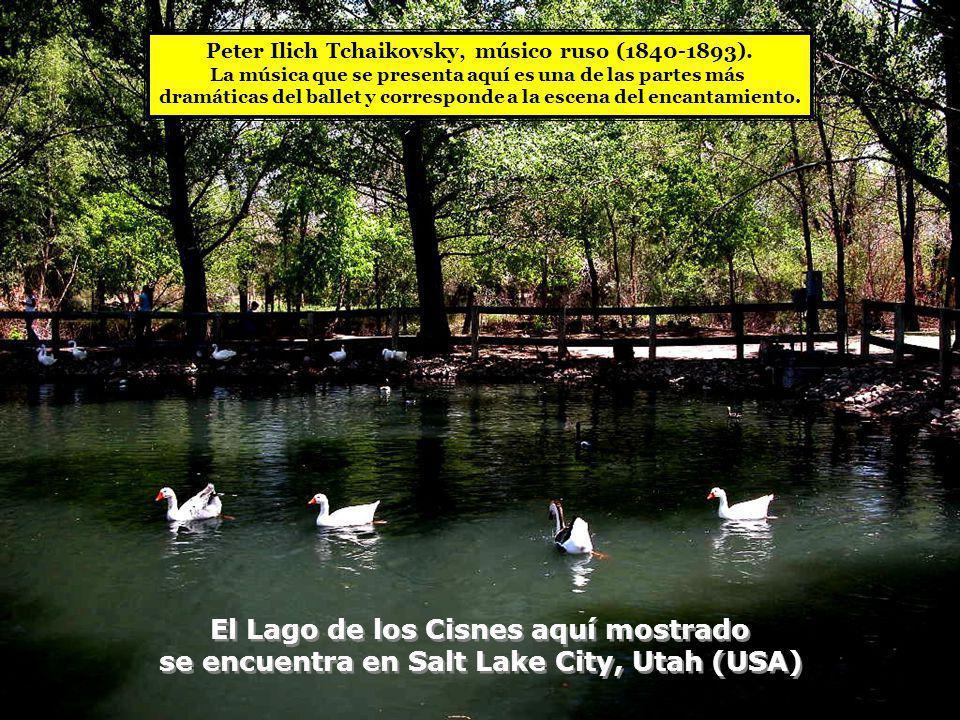 El Lago de los Cisnes aquí mostrado