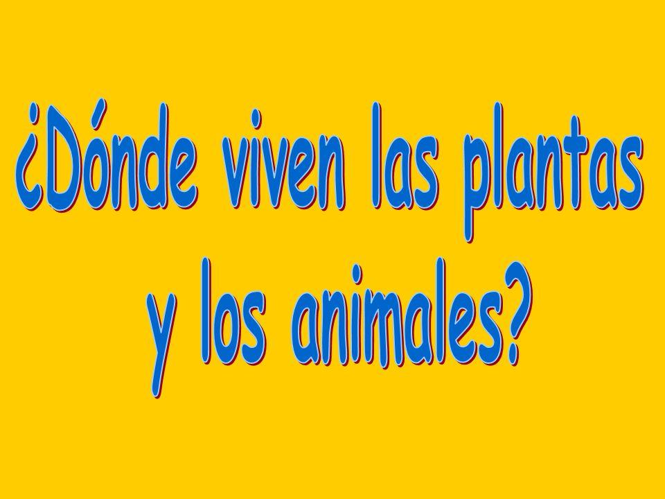 ¿Dónde viven las plantas