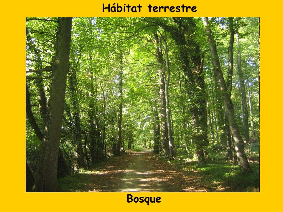 Hábitat terrestre Bosque