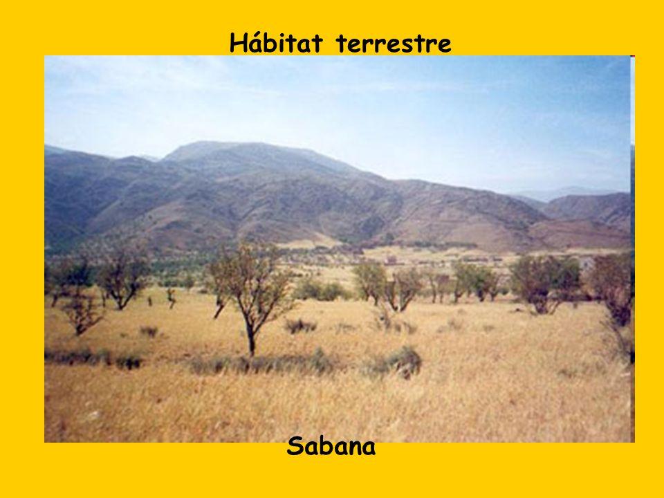 Hábitat terrestre Sabana