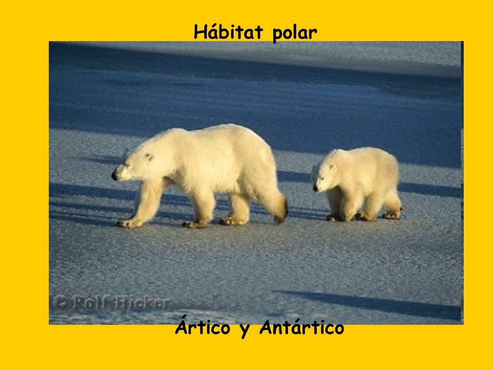 Hábitat polar Ártico y Antártico