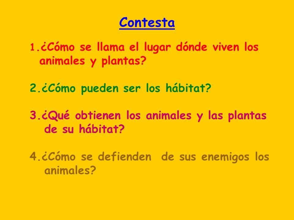 Contesta animales y plantas 2.¿Cómo pueden ser los hábitat