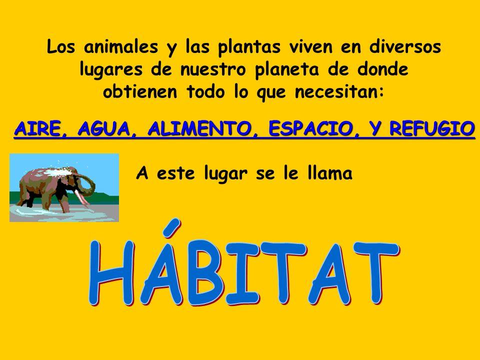 HÁBITAT Los animales y las plantas viven en diversos