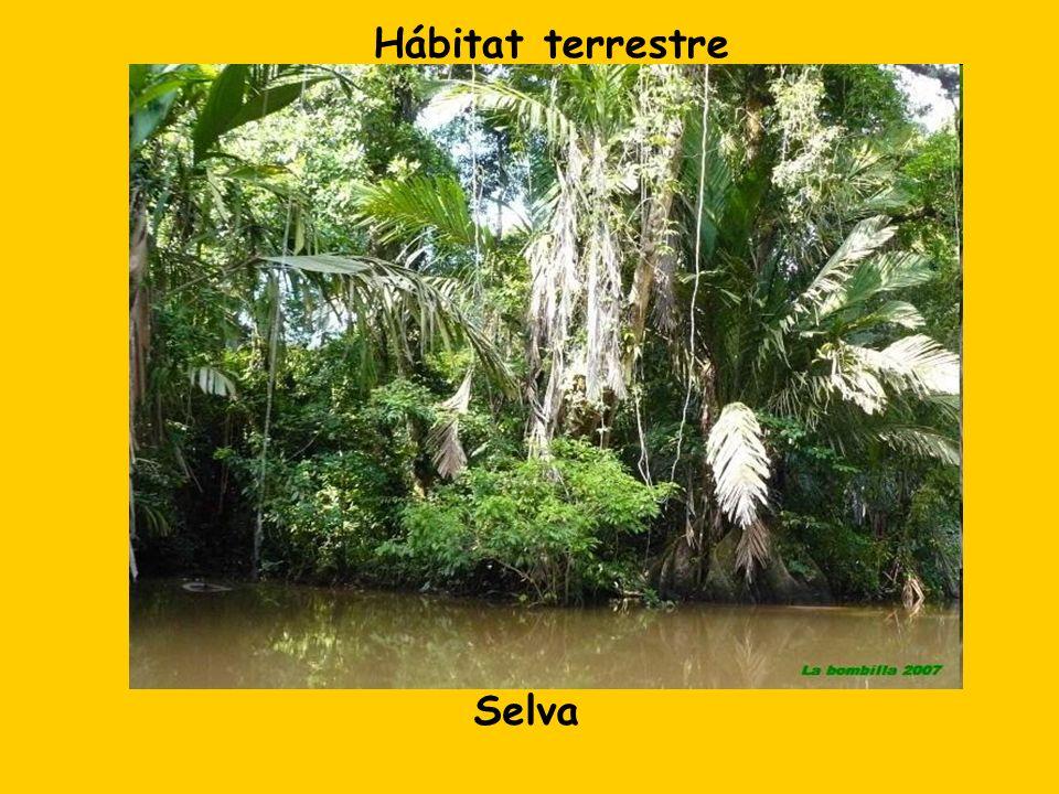 Hábitat terrestre Selva