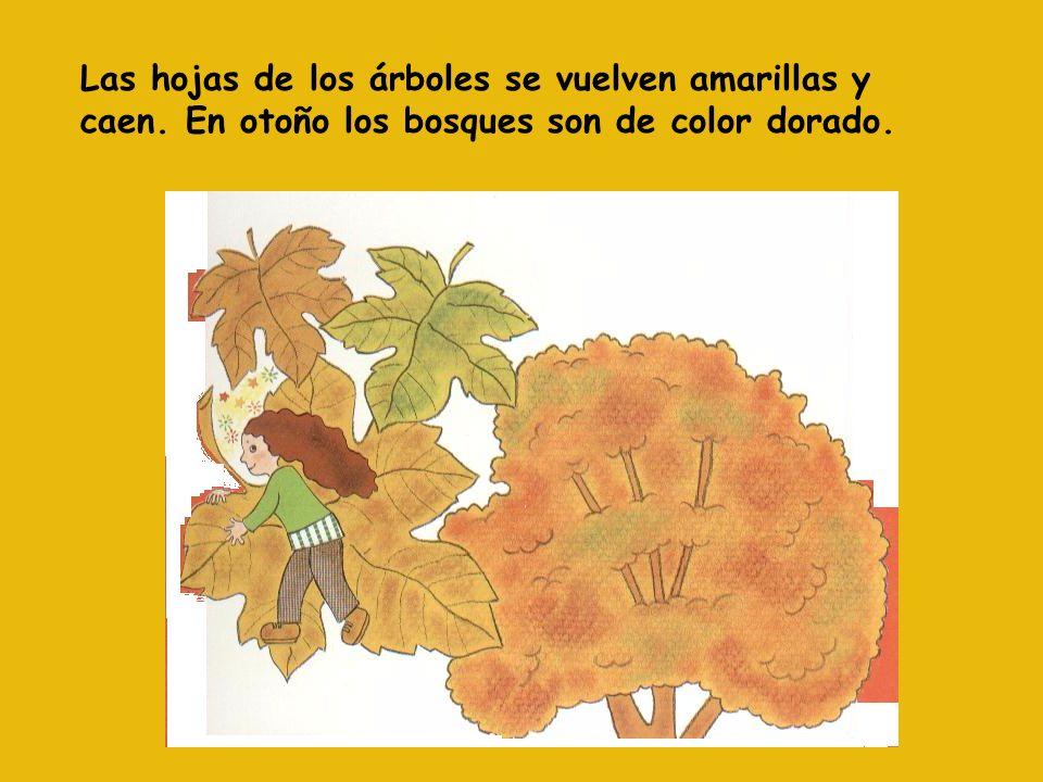 Las hojas de los árboles se vuelven amarillas y caen