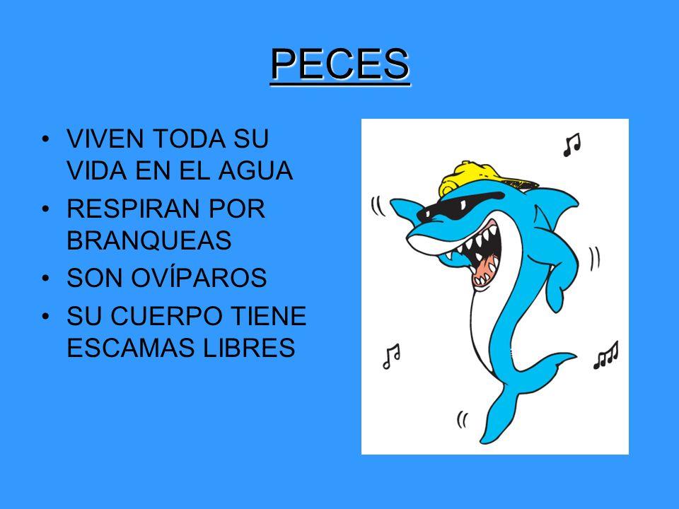 PECES VIVEN TODA SU VIDA EN EL AGUA RESPIRAN POR BRANQUEAS