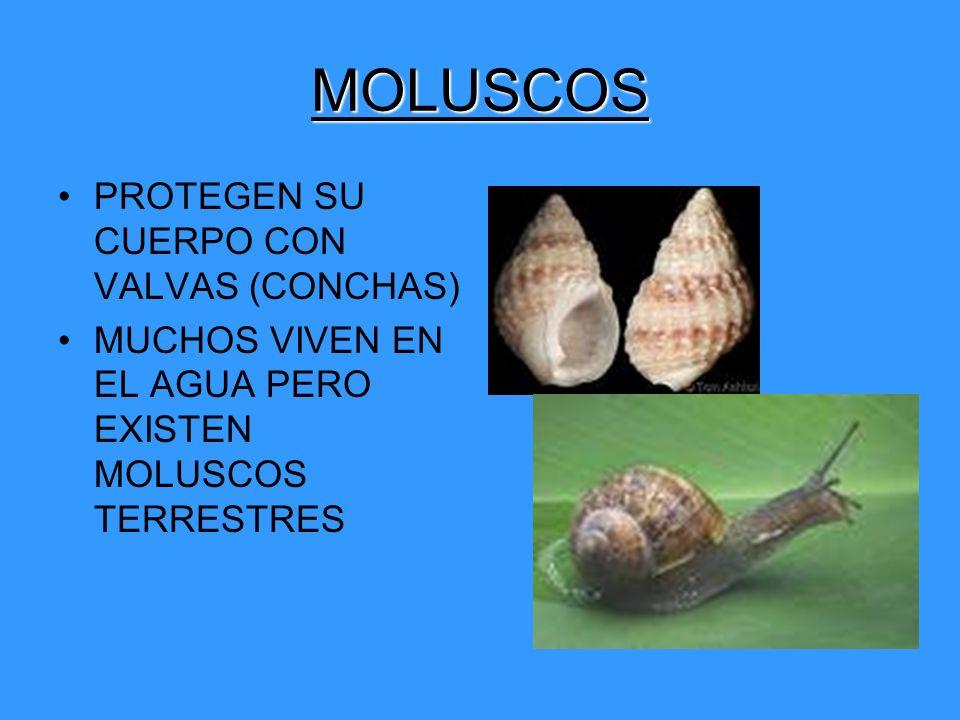 MOLUSCOS PROTEGEN SU CUERPO CON VALVAS (CONCHAS)