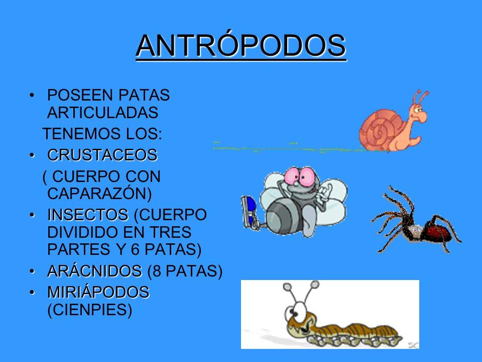 ANTRÓPODOS POSEEN PATAS ARTICULADAS TENEMOS LOS: CRUSTACEOS