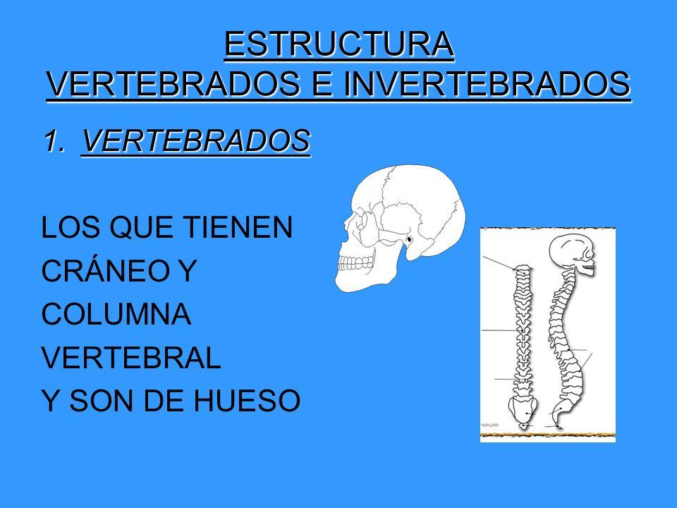 ESTRUCTURA VERTEBRADOS E INVERTEBRADOS