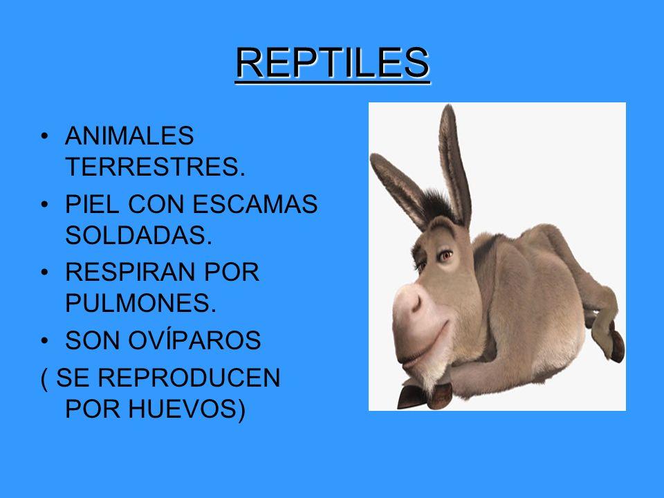 REPTILES ANIMALES TERRESTRES. PIEL CON ESCAMAS SOLDADAS.