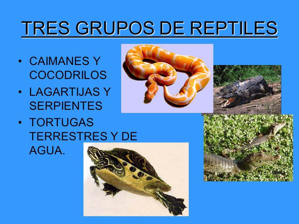 TRES GRUPOS DE REPTILES