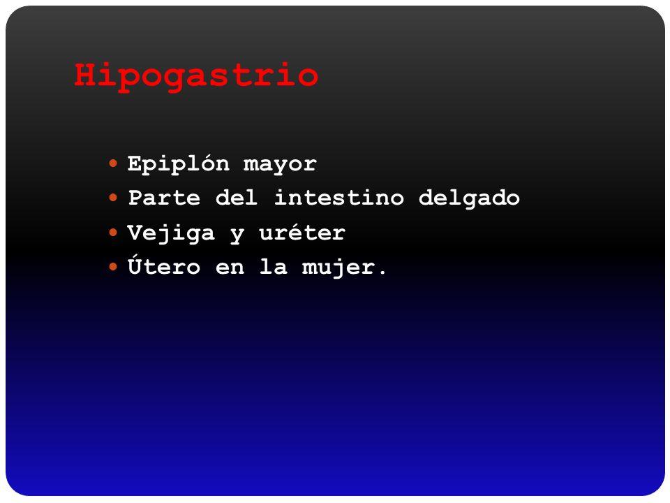 Hipogastrio Epiplón mayor Parte del intestino delgado Vejiga y uréter