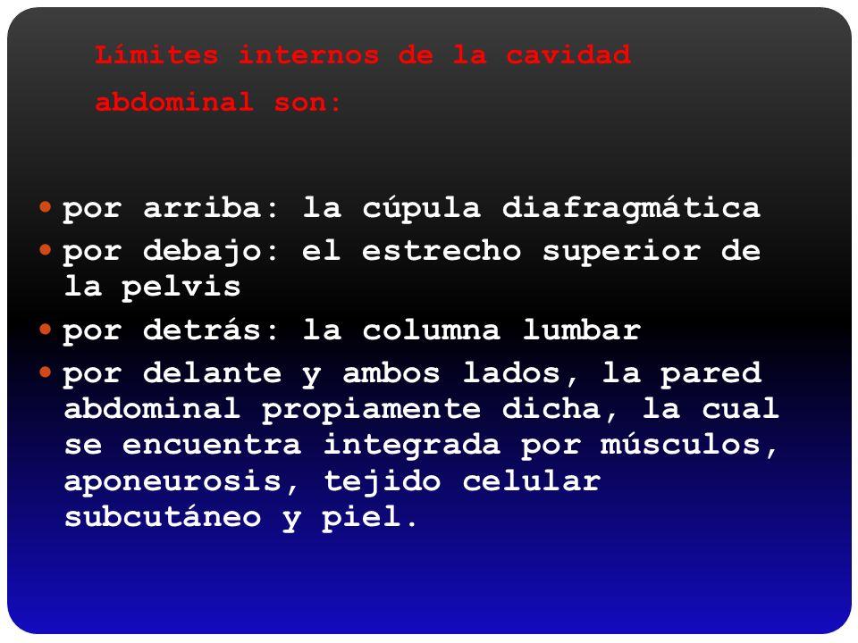 Límites internos de la cavidad abdominal son: