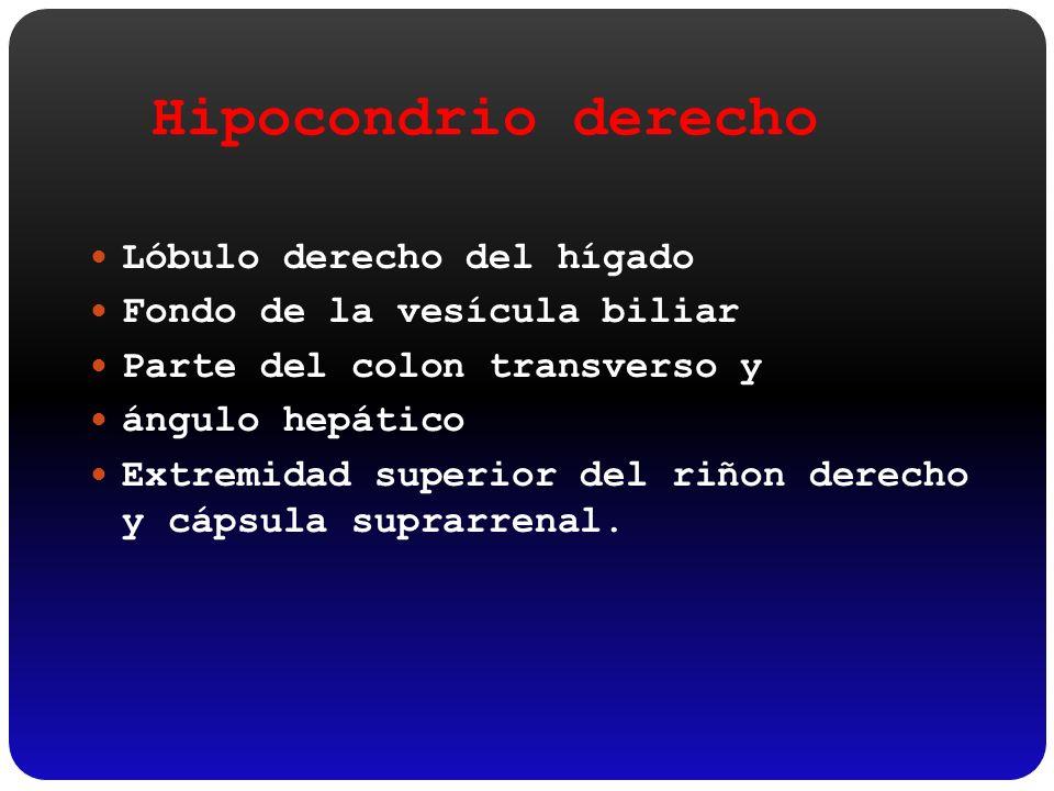 Hipocondrio derecho Lóbulo derecho del hígado