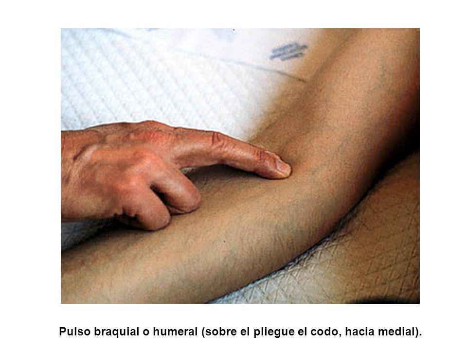Pulso braquial o humeral (sobre el pliegue el codo, hacia medial).