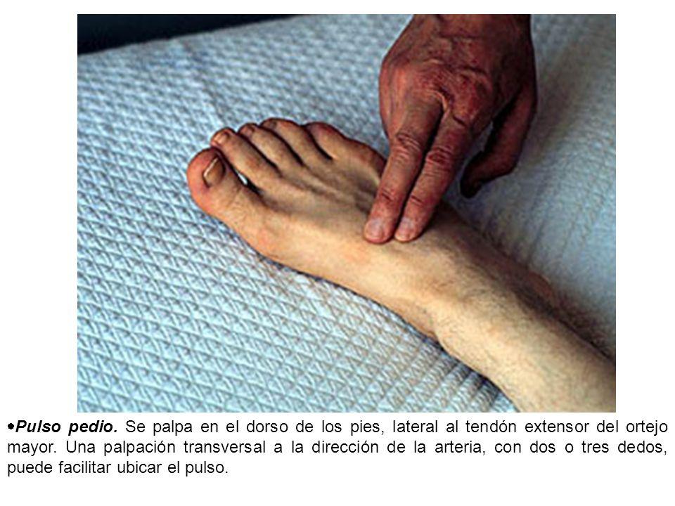 Pulso pedio. Se palpa en el dorso de los pies, lateral al tendón extensor del ortejo mayor.