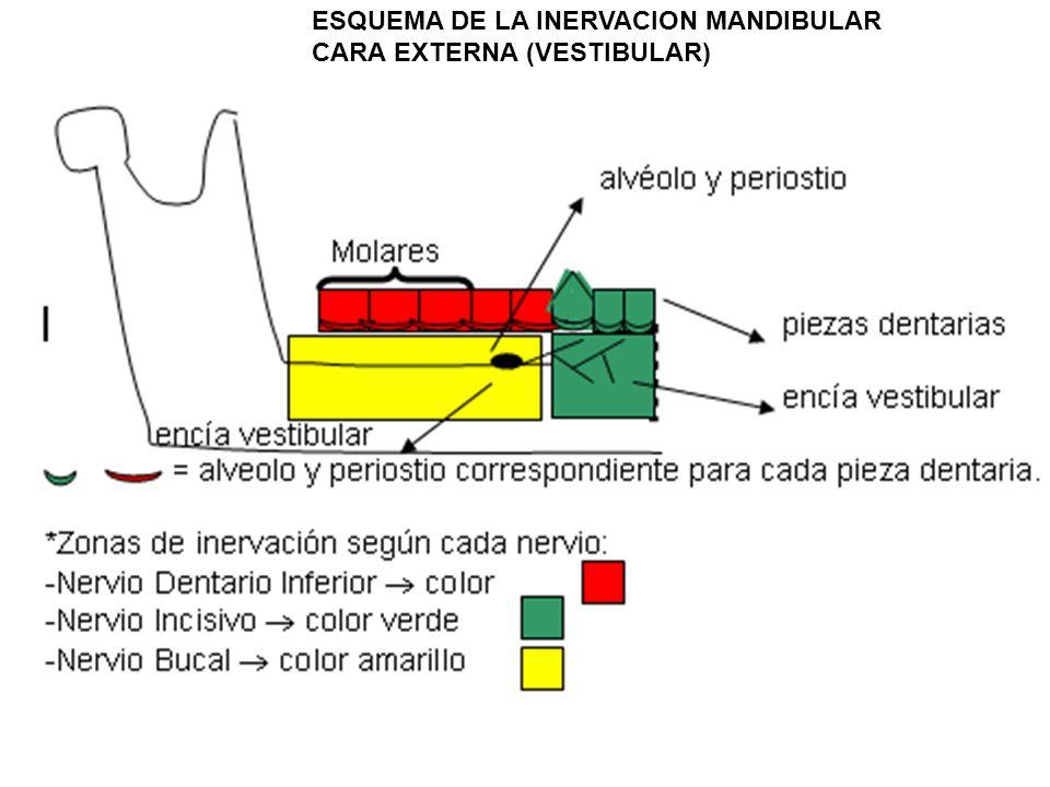 ESQUEMA DE LA INERVACION MANDIBULAR