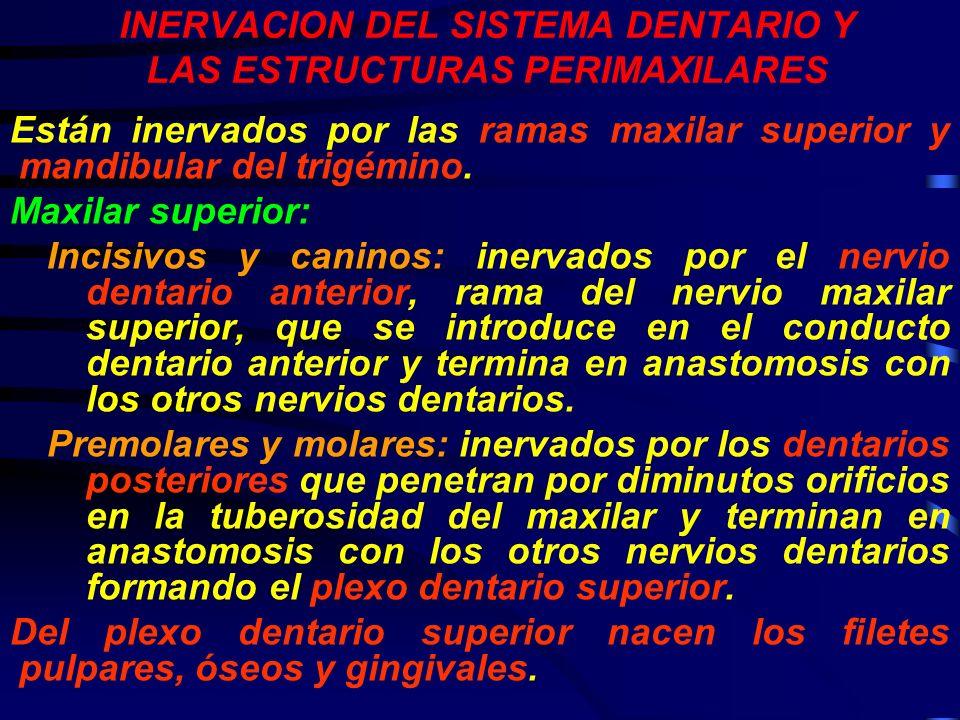 INERVACION DEL SISTEMA DENTARIO Y LAS ESTRUCTURAS PERIMAXILARES
